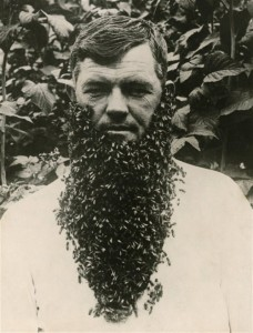 beard-of-bees